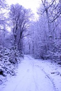 Serata invernale al parco di Monza (7 dicembre 2012)